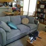 new couch!  (old cat.)
